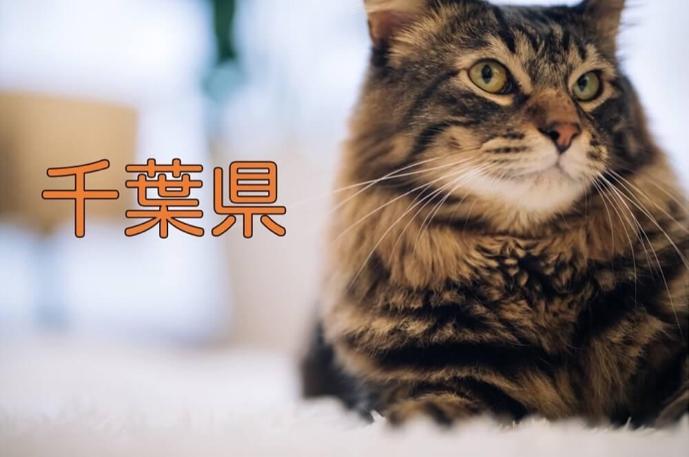 【千葉県】有機化学研究室のホームページリンク集