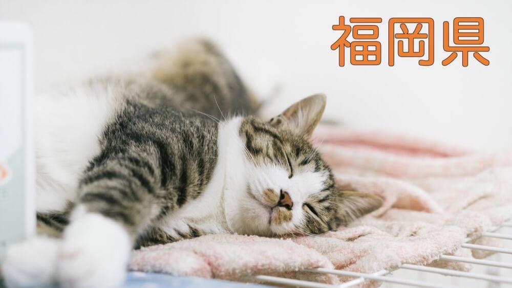 【福岡県】有機化学研究室のホームページリンク集