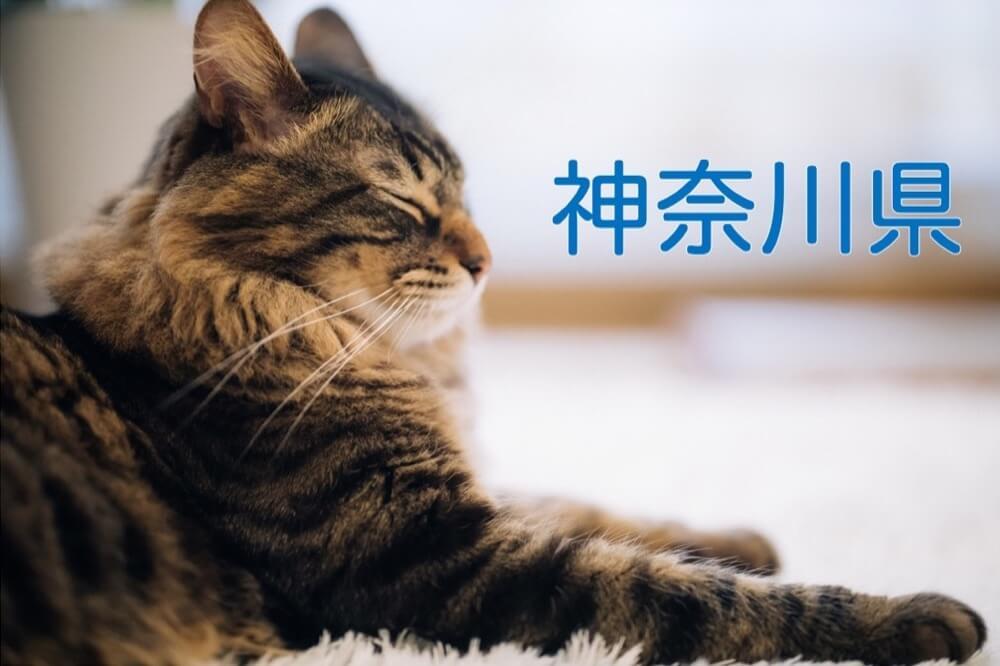 【神奈川県】有機化学研究室のホームページリンク集