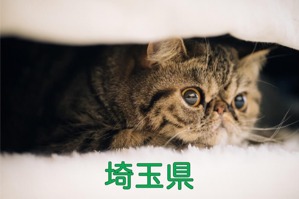 【埼玉県】有機化学研究室のホームページリンク集
