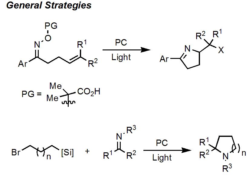 ラジカル的ピロリン合成の先行研究